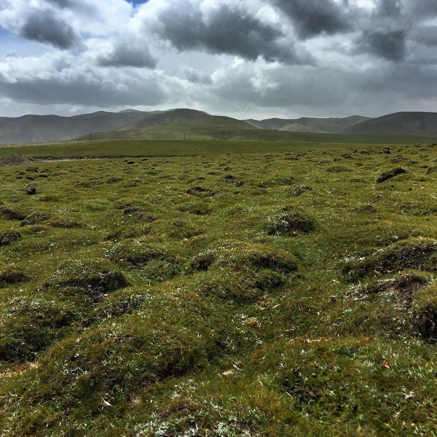 橡皮山上的草地